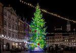 世界最大ブラジルのクリスマスツリーが規格外!日本のギネスツリーも