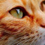 花江夏樹の愛猫の写真集がある?こんぺいとみそがカワイイ