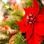 準備・片付けが簡単ラクなクリスマスツリーおすすめは?